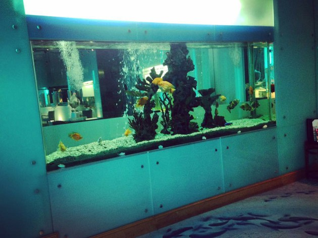 オーシャンブルーとホワイトの内装が美しすぎる「Sayad Restaurant」【UAE アブダビ】