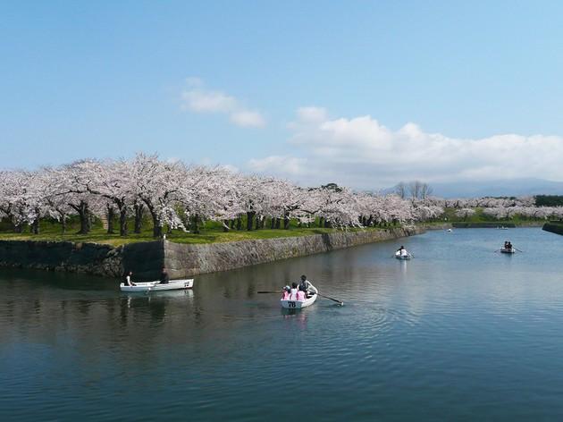 【お花見特集2020】お堀の内外に咲き乱れる桜の絶景「五稜郭公園」